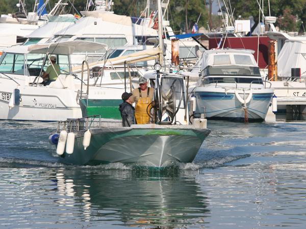 Les saintes maries de la mer camping de la brise - Office tourisme sainte marie de la mer ...